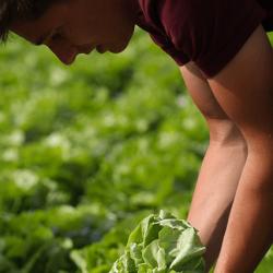 agriculteur-simon-lemiere-679x427
